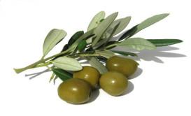 VITALIFE Pflegeprodukte mit Olivenbutter - APO DIREKT