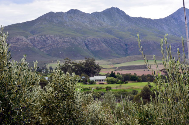 MARDOUW Olivenöl Hautpflege - APO DIREKT